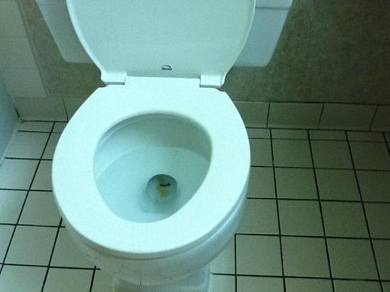 Fairfield Inn & Suites Carlsbad: FILTHY TOILET
