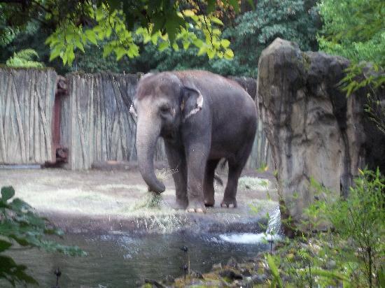 Oregon Zoo: an elephant