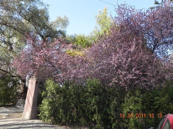 Posada Borravino: Cerejeiras na entrada