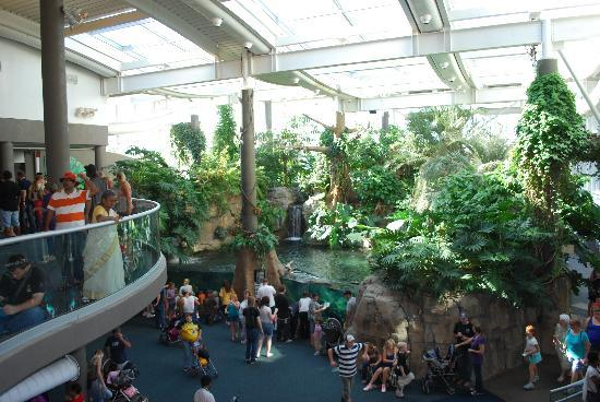 Elephants Picture Of Pittsburgh Zoo Ppg Aquarium