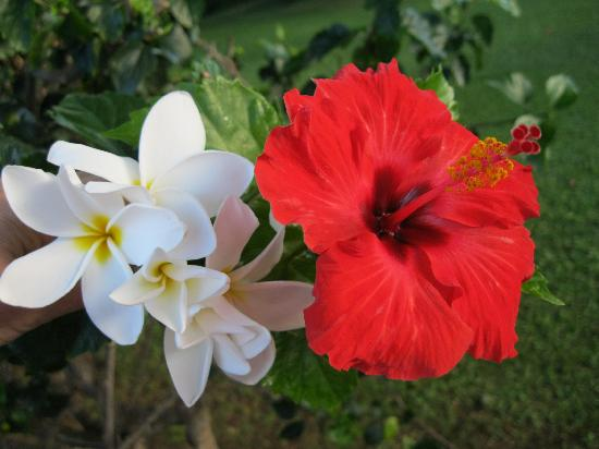 Plumeria And Hibiscus Picture Of Maui Hawaii Tripadvisor