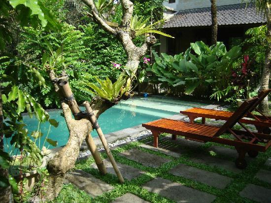 Villa Ibu: pool