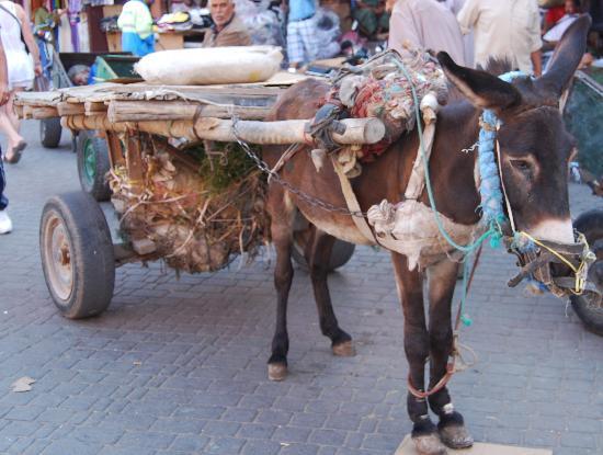 Riad Aguaviva: De arme ezeltjes in Marrakech