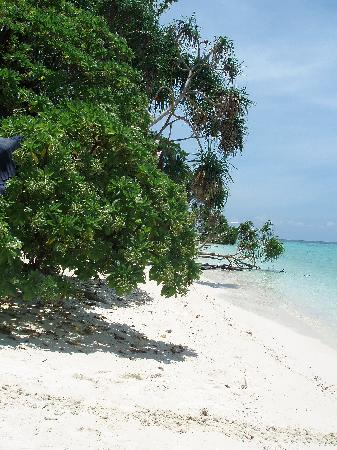 Lankayan Island Dive Resort: beach at Lankayan