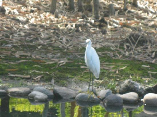 Doubletree by Hilton Orlando at SeaWorld: Nice 'wildlife' roamed around the grounds