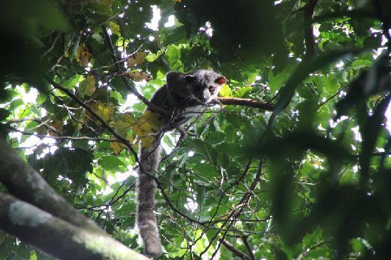 Monteverde Cloud Forest Lodge: Direkt am Hotel