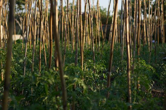 Agriturismo Marino: orto