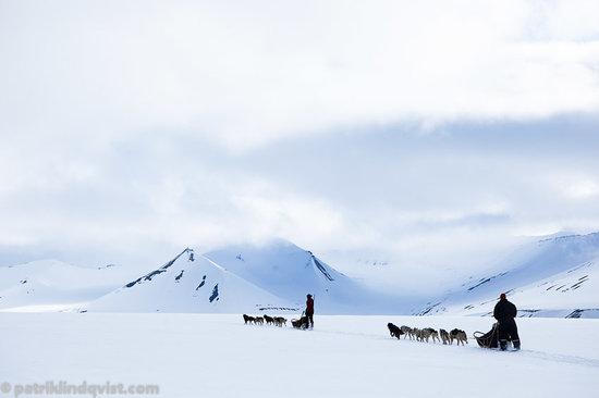 Svalbard Husky: getlstd_property_photo