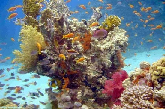 Egyptraveluxe - Day tours: hurgada red sea coral reefs