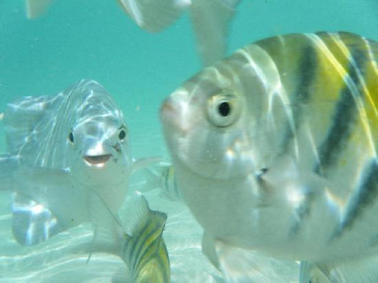 Bananarama Beach and Dive Resort: Friendly fish