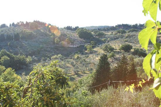 Villa Di Campolungo Agriturismo : view out our window