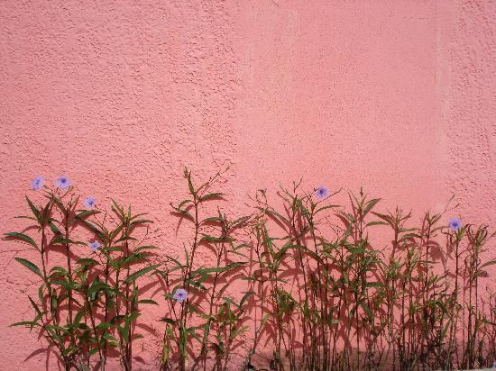 Barefoot Travelers Rooms: I was drawn to this wall in the yard - loved how the colors popped!
