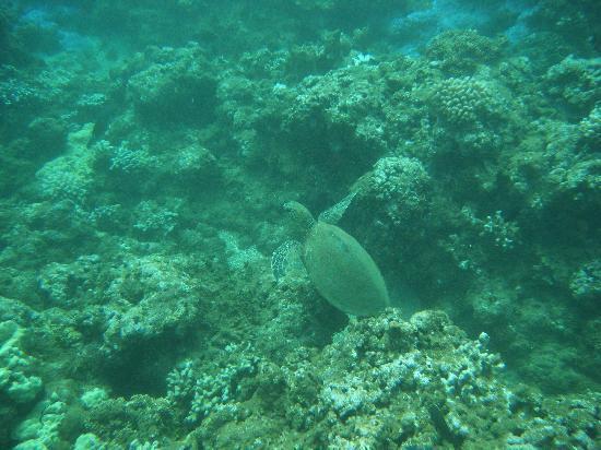 Hawaii Ocean Rafting: Turtle