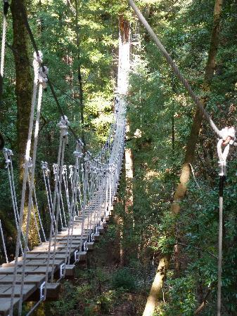 Sonoma Canopy Tours scary bridge for me & scary bridge for me - Picture of Sonoma Canopy Tours Occidental ...