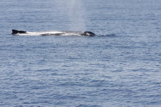 Tallship Island Adventures: Our first whale sighting :-)
