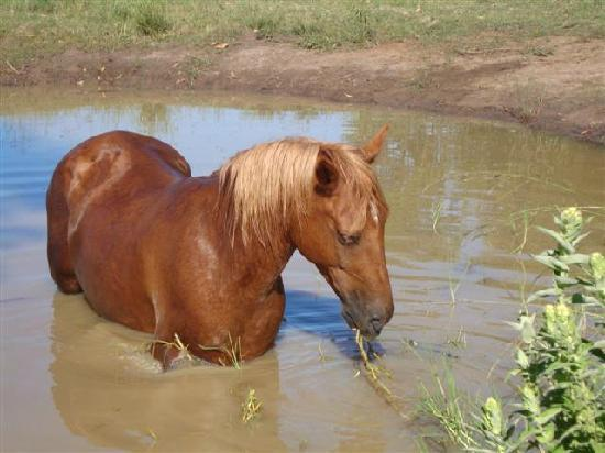 Garden Route Horse Trails: Zalatoy, another of our rescue horses having fun on a hot day