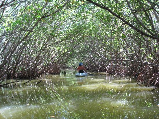 Fin Expeditions: Going through the Mangroves