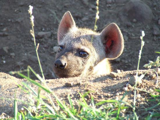 Legadema Safaris - Day Tour : hallo