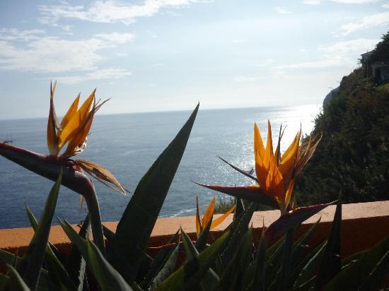 Hotel Alpino Atlantico: Im Hotelgarten