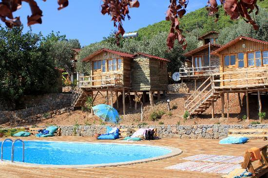 The Pool And Accommodation Picture Of Olive Garden Kabak Faralya Tripadvisor