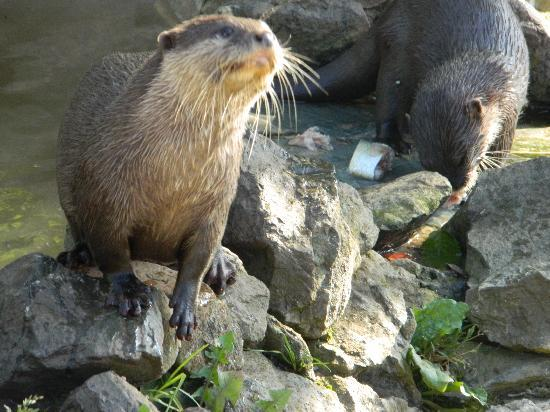 Africa Alive!: Otters