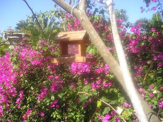 AHA Auberge Hollandaise Guest House: Angolo del giardino con casetta per uccellini
