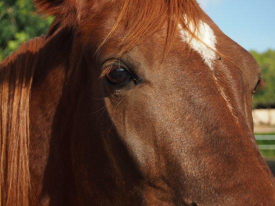 Son Sama Finca: Cavall de trot