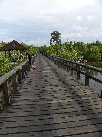 โรงแรมซานติกาพรีเมียซีไซด์รีสอร์ทมานาโด: wooden walkway above mangroves