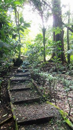 La Montana y el Valle Coffee Estate Inn: A path on their grounds