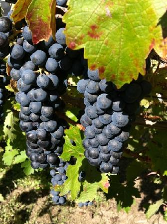 Chic Family Tours: Trefethen Vineyards