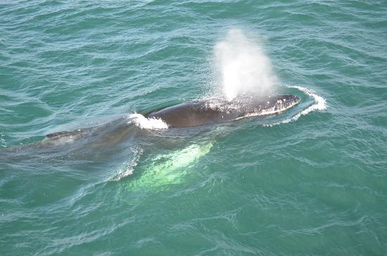 Bar Harbor Castlemaine Inn B&B: Out whale watching - Gulf of Maine