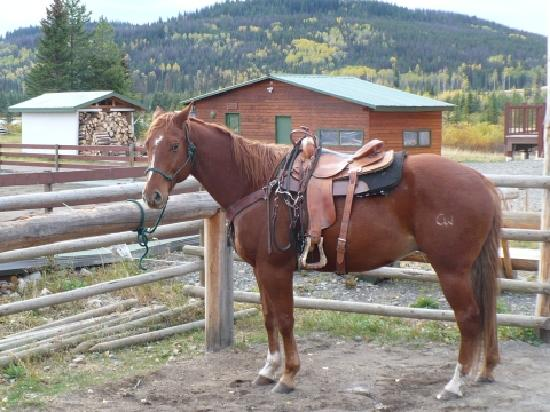 Free Rein Guest Ranch: Boo