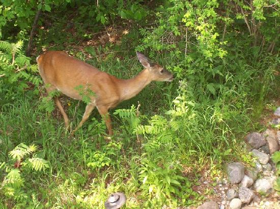 Coachlite Inn of Sister Bay: Bambi