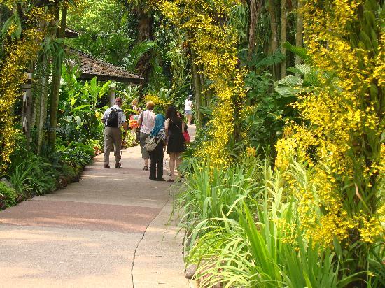 สวนกล้วยไม้แห่งชาติสิงคโปร์: Bowers of orchids over pathway