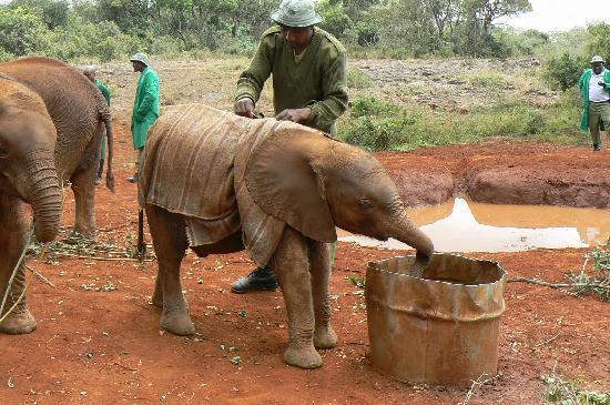 David Sheldrick Wildlife Trust: baby elephant