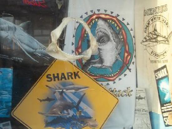 Shark Attack: Shark jaws and teeth for sale