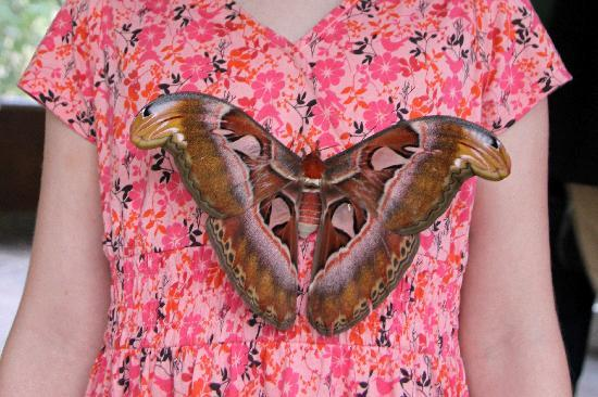 Tabanan, Indonesia: Large butterfly