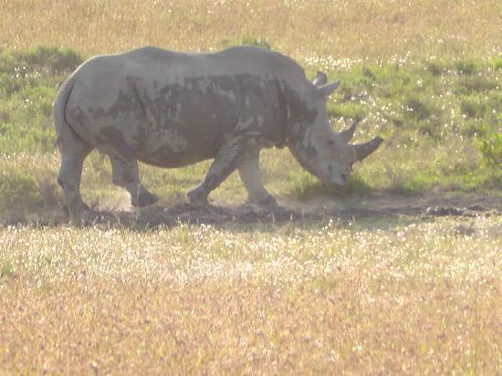 Bush Lodge - Amakhala Game Reserve : rhino