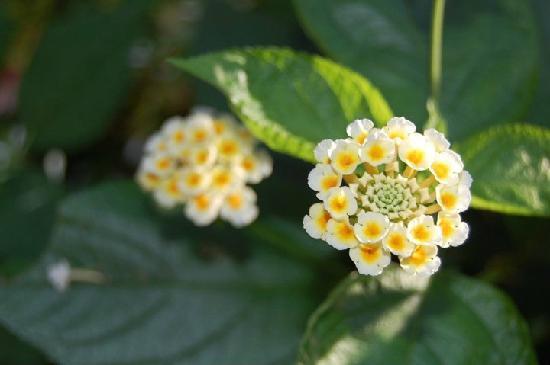 Huntsville Botanical Garden: flowers