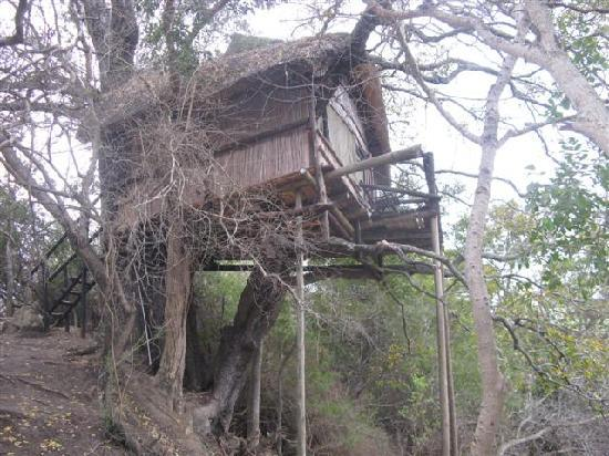 Marc's Treehouse Lodge: One of the further away treehouses