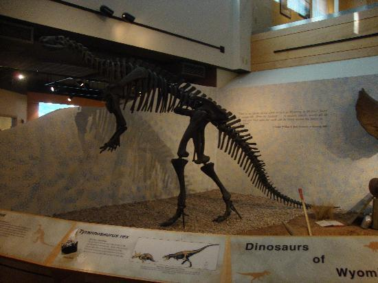 Wyoming State Museum: Dinosaur