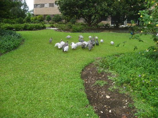 Movich Las Lomas Hotel : Flock of birds at Hotel