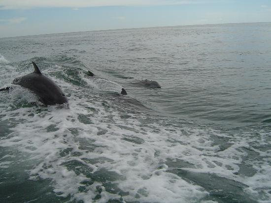 Little Toot Dolphin Adventures: a pod following us