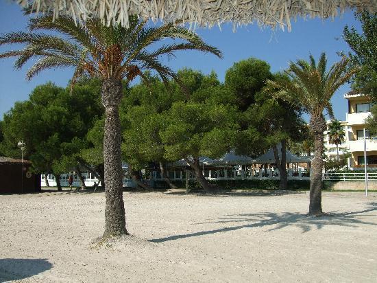 Hotel JS Sol de Alcudia: Alcudia beach