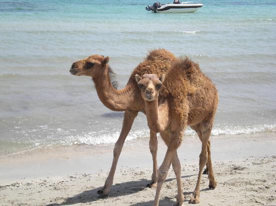 Yadis Djerba Golf Thalasso & Spa: Strandleben