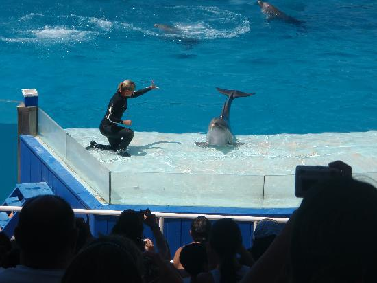 Aquarium: Show