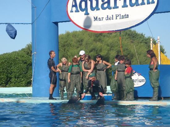 Aquarium: Encuentro con Delfines