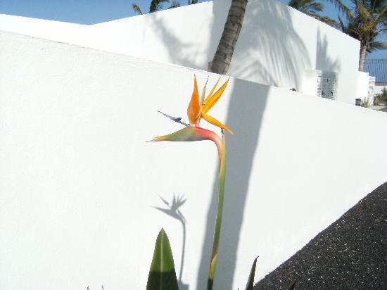 Las Costas: Bird of paradise in garden