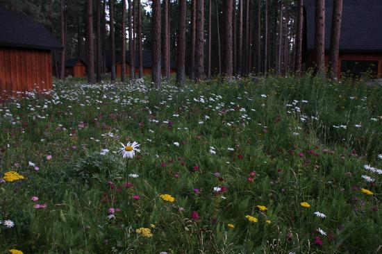 Five Pine Lodge & Spa: The fields filled with flowers...