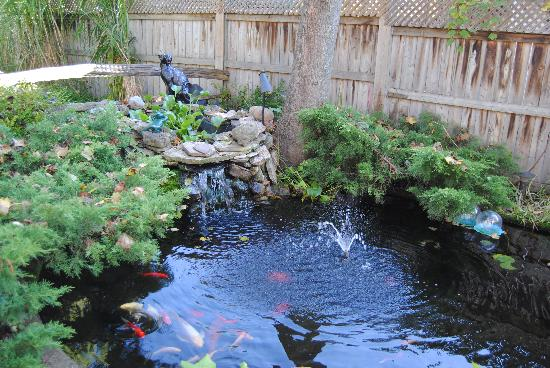 Blue Gables Bed & Breakfast: The Fishes in the pond